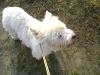 Hundebetreuung Stieglecker - Tierbetreuer Wien