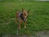 Dogwalking Wien - Tierbetreuung Wien