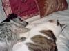 Hundebetreuungwien / Hund und Katze - Hunde und Katzen kann man aneinander gewöhnen