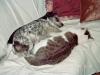 Hundebetreuungwien / Hunde und Katzen - Freunde fürs Leben