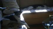 Dog cat - pets - pet sitter Stieglecker commercial pet care Vienna Austria
