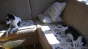 Dog Cat - Terrier Domestic Cat - Indoor Animals Vienna Austria