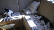 Haushund Hauskatze - Vor Ort Tierbetreuung Stieglecker - mobile Haustierbetreuung Wien Österreich