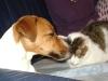 Hundebetreuung Wien - Betreute Tiere