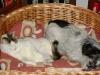 Hundebetreuungwien - Kater Neo/ Jack Russel Fox Terrier Winni
