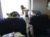 Hundebetreuungwien - Hunde und Katzen im gemeinsamen Haushalt