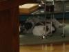 Hundebetreuungwien - Terrier Mix Winni und Kater Neo beim Kuscheln