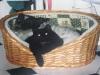 Hundebetreuungwien - Katzenbaby Nela und Jack Russell Terrier Winni
