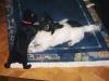 Hundebetreuungwien - Katzenbaby spielt mit Terrier Weibchen Winni