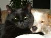 Hundebetreuungwien - Hunde und Katzen