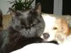 Hundebetreuungwien - Kätzin Amelia und Terrier Mischa beim Kuscheln