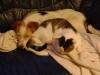 Hundebetreuungwien - Parson Russell Terrier Mischa und Kater Neo