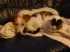Hundebetreuungwien - Terrier und Kater