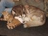 Hundebetreuungwien - Katze- Hund- Mensch
