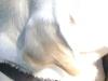 Hundebetreuung Wien / Die Ohren unserer Hunde - Das Ohr ist ein Sinnesorgan mit zwei Funktionen: dem Hörsinn und dem Gleichgewichtssinn.