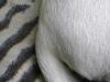 Hundebetreuung Wien / Schwanz des Hundes - Für den Hund ist seine Rute ein wichtiges Hilfsmittel, um die Balance zu halten. Insbesondere bei Sprüngen, beim Beschleunigen, Bremsen oder bei schnellen Wendungen setzt der Hund die Rute zu diesem Zweck ein.