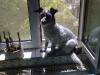 Terrier Mix Winni beim Sonnenbaden - Hunde Urlaubsbetreuung Wien