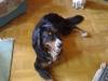 Berner Sennenhund Gaston lächelt - Vorort Betreuung