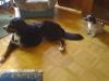 Winni und Gaston beobachten - Betreute Hunde