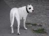 Dogo Deissen - Haustierbetreuung