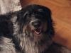 Hundebetreuung mobil vor Ort - Wolfhound Mix
