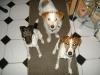 Hundebetreuung Stieglecker - Hundetraining Bildergalerie - Terrier Training