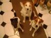 Hundebetreuung Stieglecker - Hundetraining Bildergalerie - Augenkontakt Training