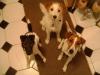 Hundebetreuung Stieglecker - Hundetraining Bildergalerie - Indoor Training