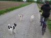 Hundebetreuung Stieglecker - Hundetraining Bildergalerie - Outdoor Training