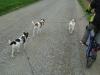 Hundebetreuung Stieglecker - Hundetraining Bildergalerie - Foxterrier  & Parson Russell Terrier Konditionstraining