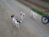 Hundebetreuung Stieglecker - Hundetraining Bildergalerie - Outdoor Terrier Training