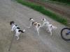 Hundebetreuung Stieglecker - Hundetraining Bildergalerie - Hunde Gruppentraining
