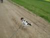 Hundebetreuung Stieglecker - Hundetraining Bildergalerie - Hunde Einzeltraining