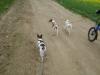 Hundebetreuung Stieglecker - Hundetraining Bildergalerie - Outdoor Gruppentraining