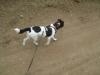 Hundebetreuung Stieglecker - Hundetraining Bildergalerie - Fox Terrier Training