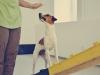 Hundebetreuung Stieglecker - Hundetraining Bildergalerie - Indoortraining