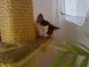 Hauskatze Leila - Tier Betreuungsservice Wien