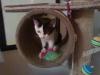 Katzenbaby - Katzenbetreuung und Hundebetreuung Wien