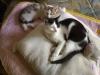 Katzenbabys - Tierbaby Betreuung Wien