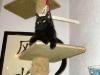 Schwarze Hauskatze - Tierservice Wien