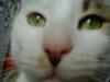 Hauskatze - Tierbetreuung mobil vor Ort