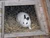 Kleintierbetreuung - Kaninchen Emilie beim Ausschauhalten