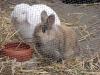 Kleintierbetreuung - Kaninchen Bub Felix und Mädchen Marie