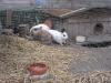 Kleintierbetreuung - Kaninchentummeln
