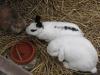 Kleintierbetreuung - Kaninchen Mädchen Emilie und Bub Felix
