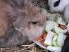 Kleintierbetreuung - Kaninchen Marie und Emilie beim Dinieren
