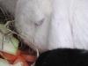 Kleintierbetreuung - Kaninchen Felix