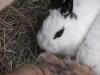 Kleintierbetreuung - Kaninchen Mädchen Emilie