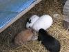 Kleintierbetreuung - Kaninchenmal