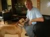Hundebetreuer Wien - Vorort Betreuung